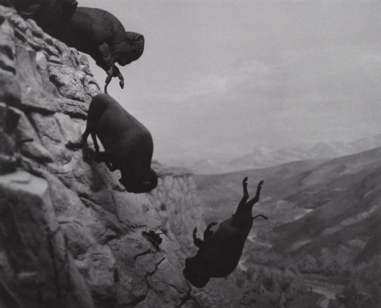wojnarowicz_david-buffaloes